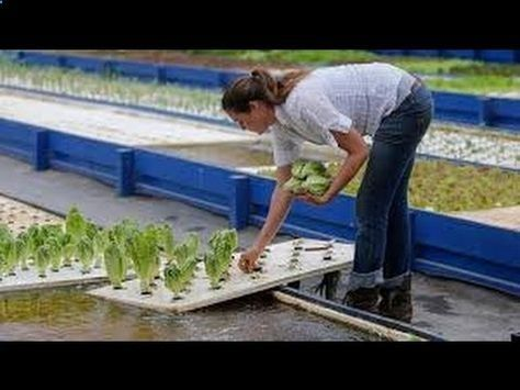 How To Build A Cheap Aquaponics System Easy Diy Aquaponics Youtube