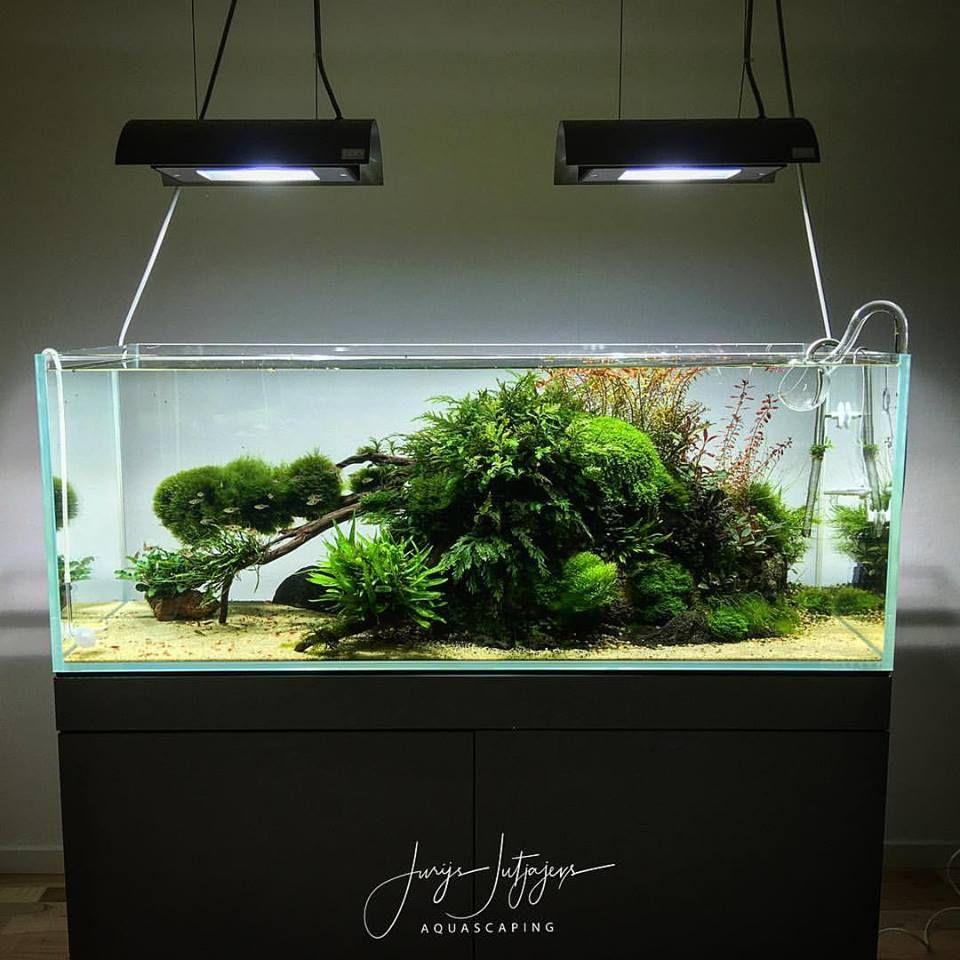 Pin Von Alex Hausen Auf Aquascaping Aquaristik Aquarium Aquarium Ideen