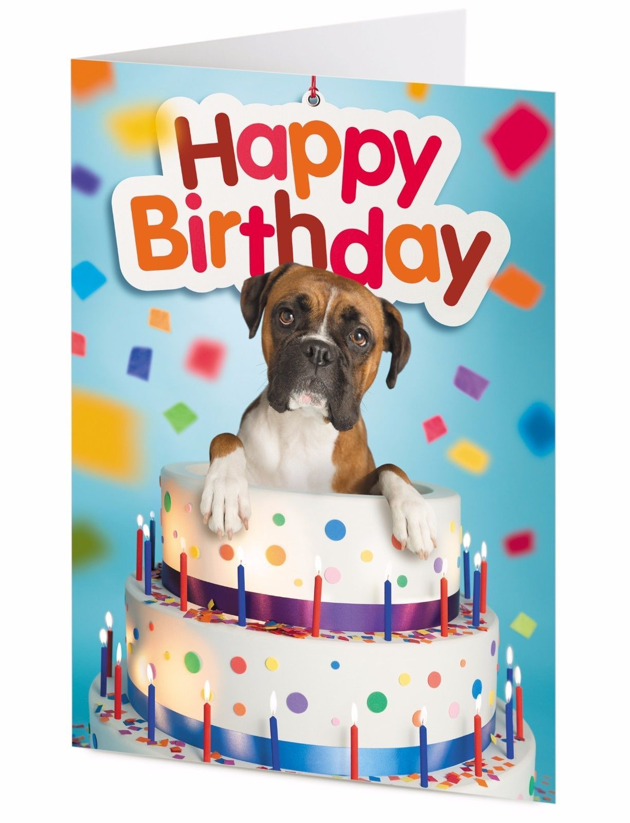 3 Gbp Boxer Dog Inside A Giant Birthday Cake Birthday Card Ebay