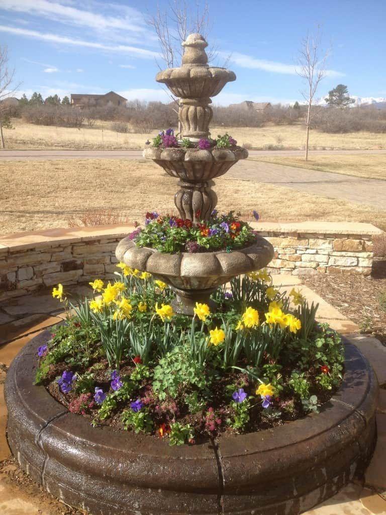 Flowers by season in colorado springs spring flowers flowers and flowers by season in colorado springs mightylinksfo