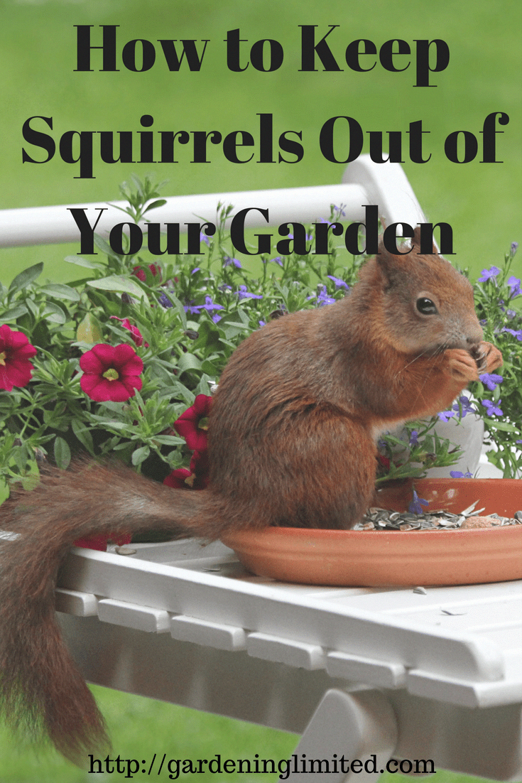 How To Get Squirrels To Stop Digging Up Lawn