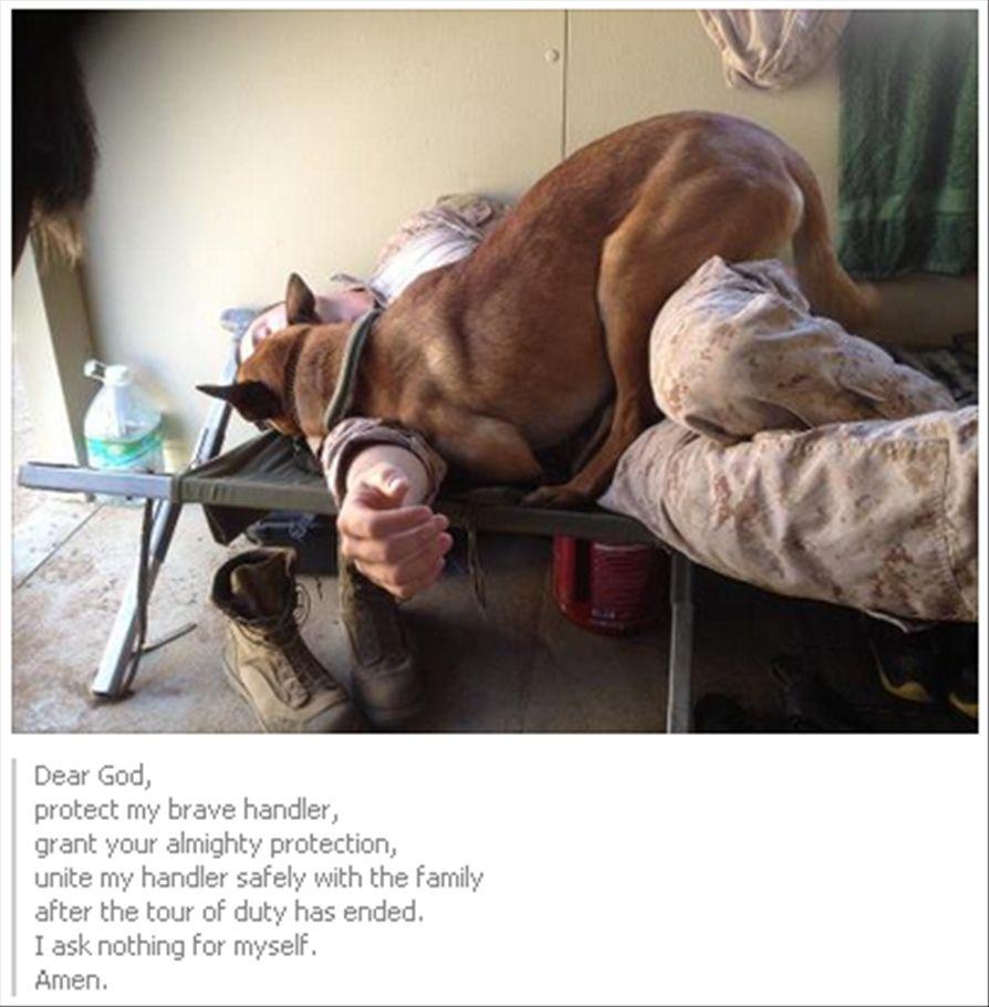 Schaferhundwelpen Die Bezaubernd Sind Hunde Hundebabys