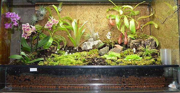 forums de jardinage afficher le sujet mon terrarium aquarium pinterest. Black Bedroom Furniture Sets. Home Design Ideas