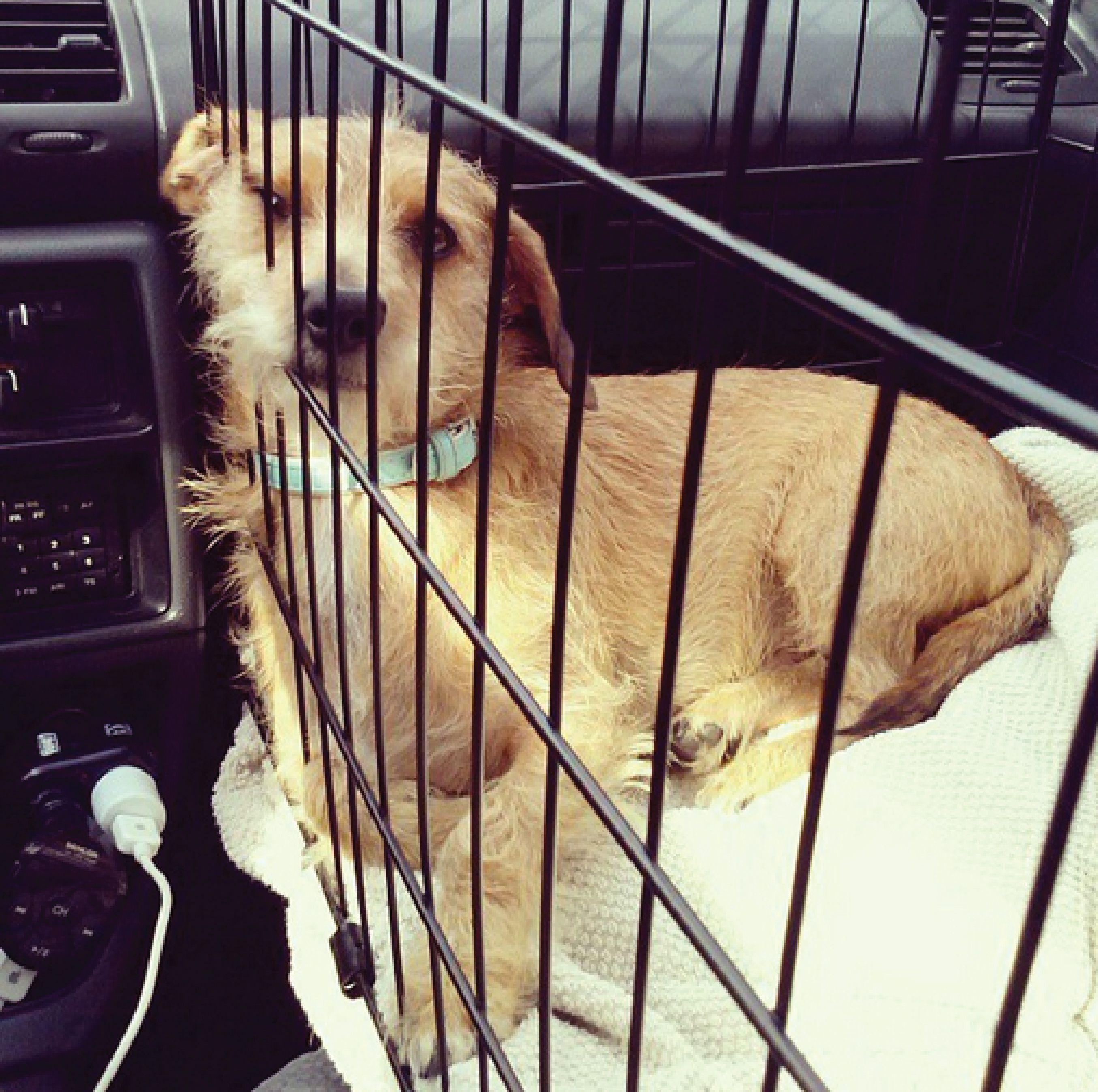 Pin Von Denksportspielehunde Auf Pawshake Osterreich Hunde Dachshund Welpen Hunde Dachshund Funny