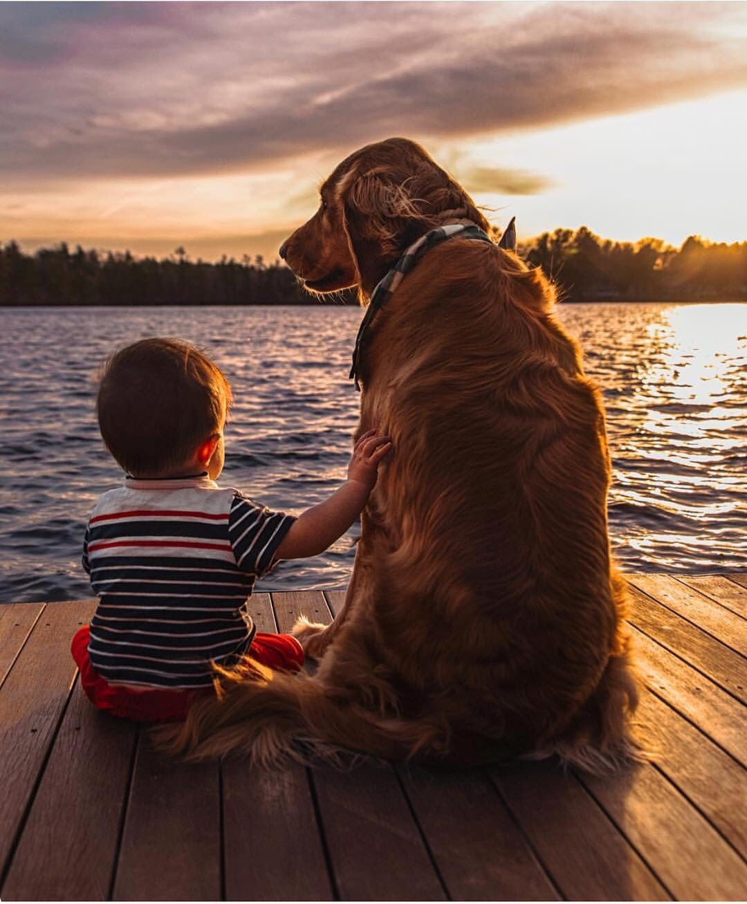 Pin by danielle pape on dogs pinterest animals dogs and