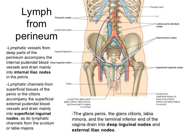 abdomen-pelvis-and-perineum-anatomy-wwwjinekolojivegebelikcom-69-728 ...