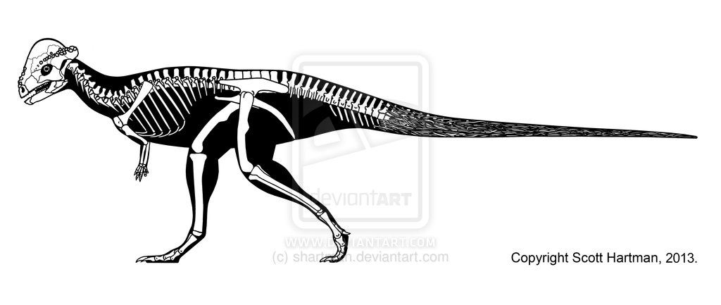 pachycephalosaurus skeleton printable | DeviantArt: More ...