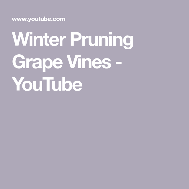 Winter Pruning Grape Vines  YouTube Commercial gardeners can look forward to it in March there are already a lot of garden work to be done in the commercial garden becaus...