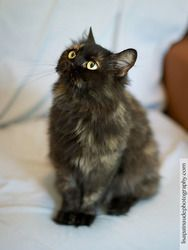 Adopt Yara On Petfinder Long Haired Cats Cats Dog Cat