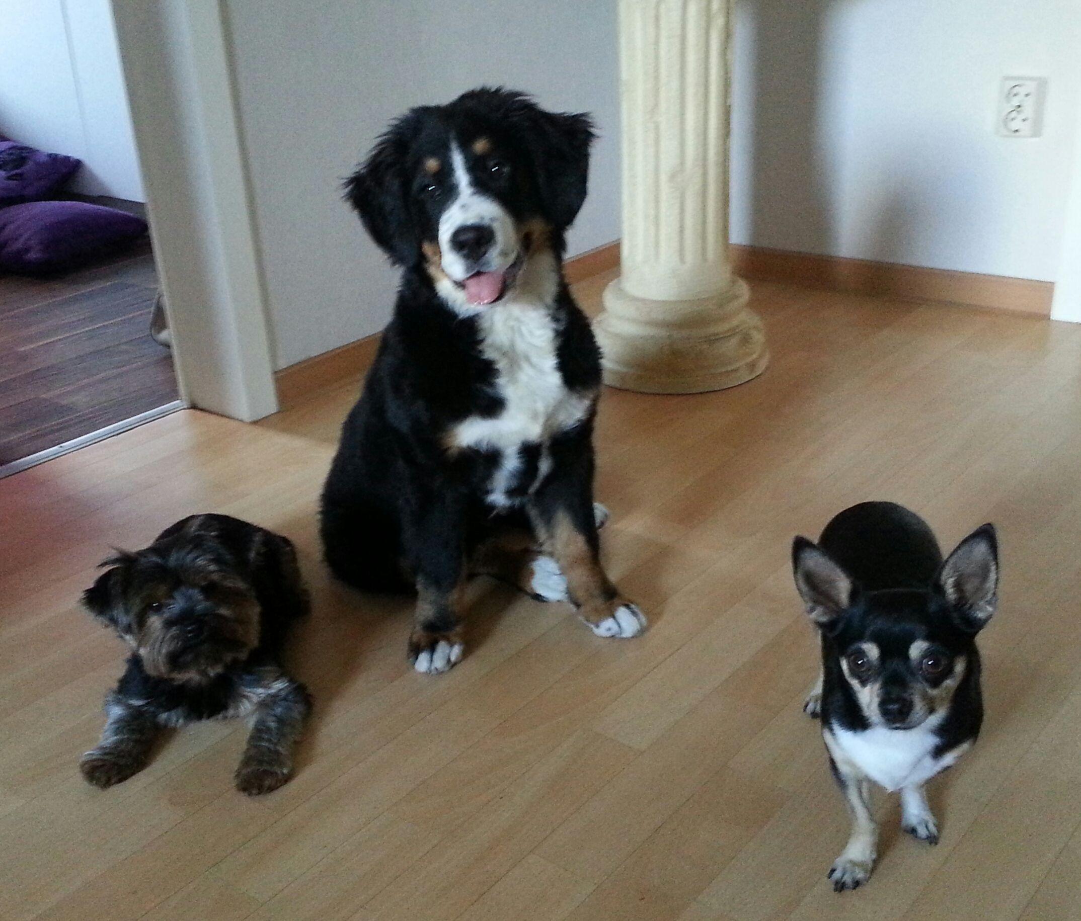 Mila Pawshake Hunde