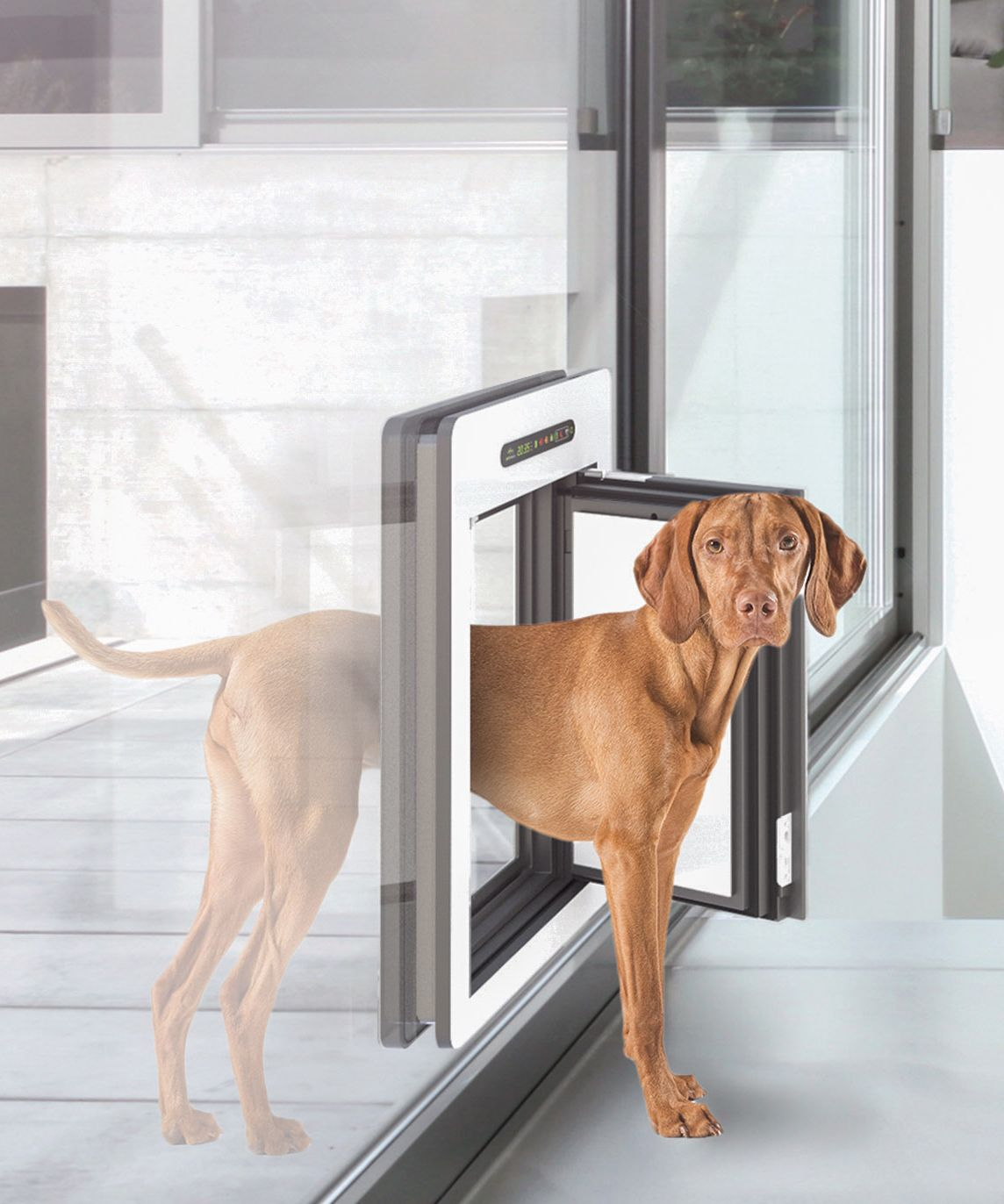 Best Electronic Dog Door Reviews Dog Door Pet Door Cat Door