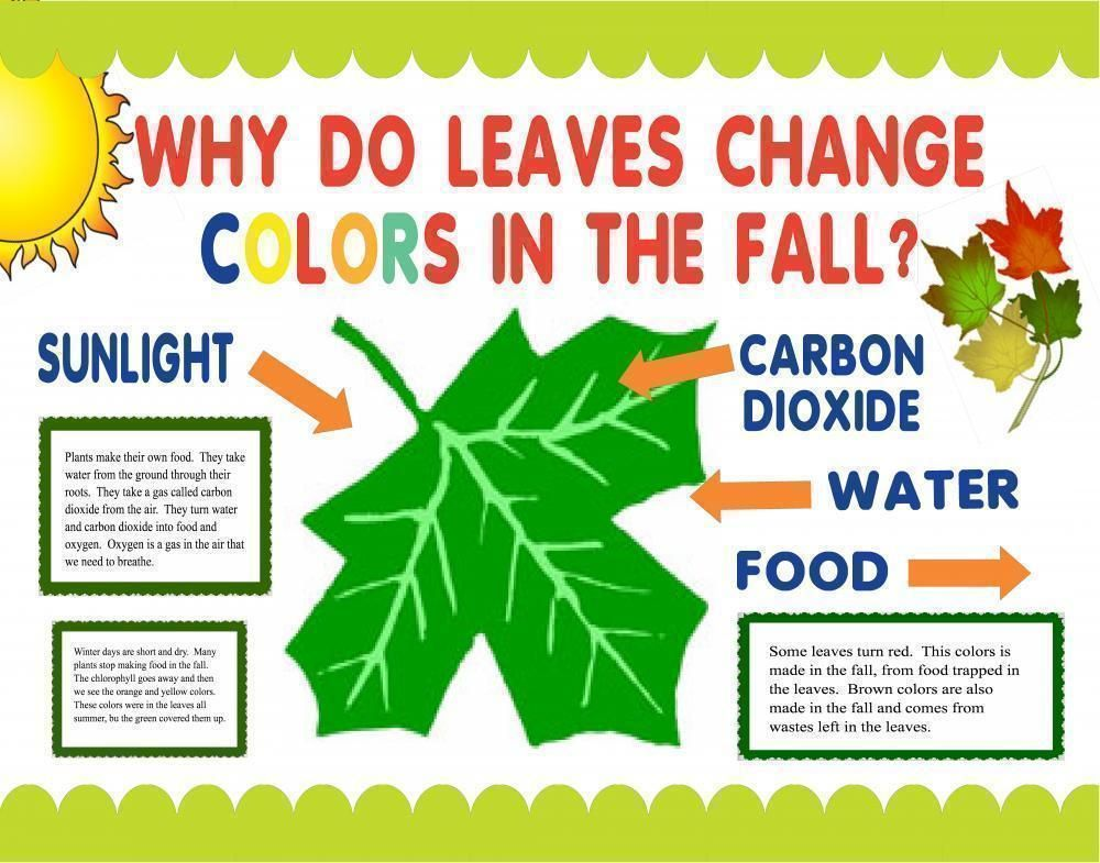 Translations Into Italian: Poster Ideas - Why Do Leaves