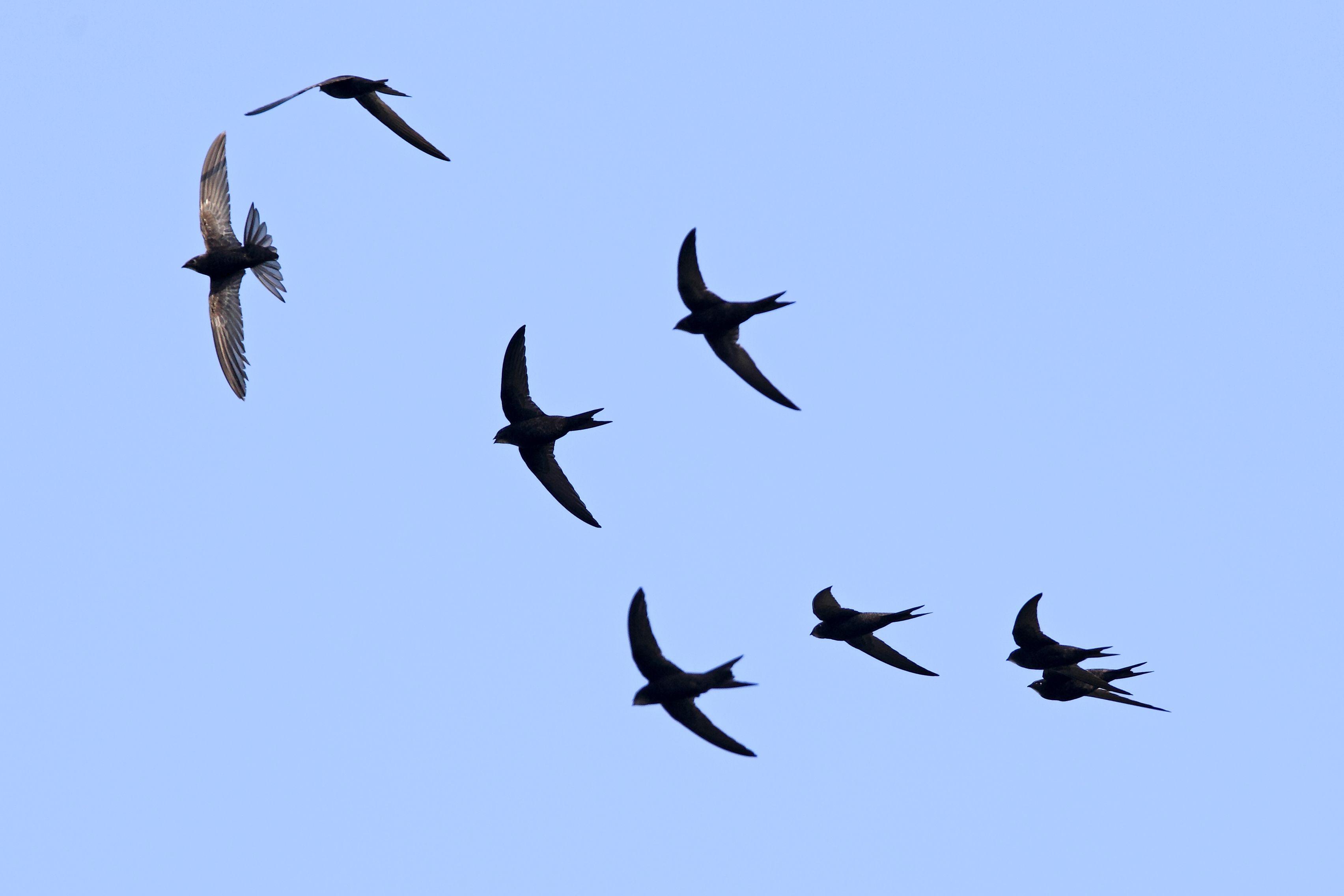 кефире картинки летящих птиц отличие японских седанов
