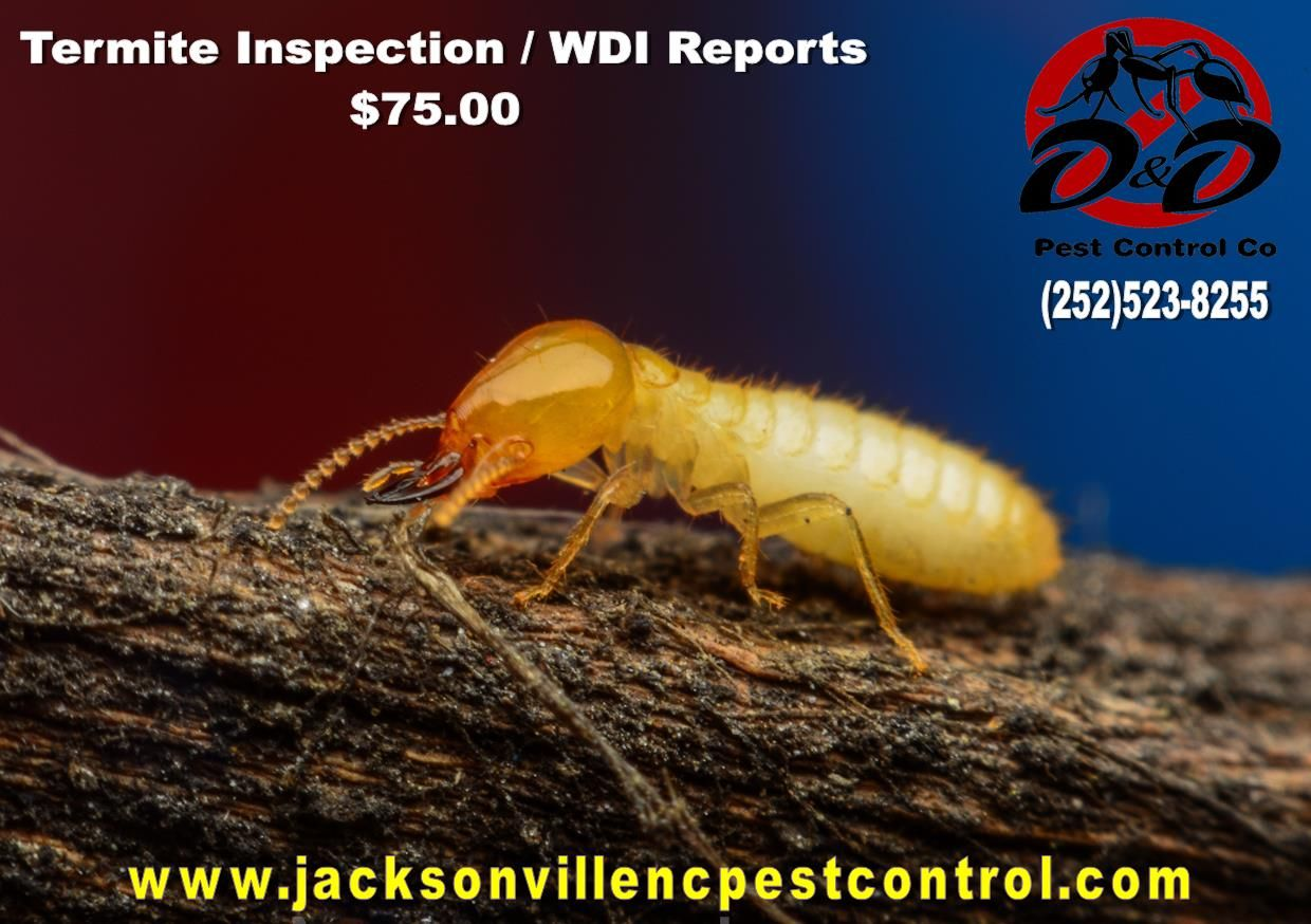 Termite Inspection for homes for sale / Real Estate