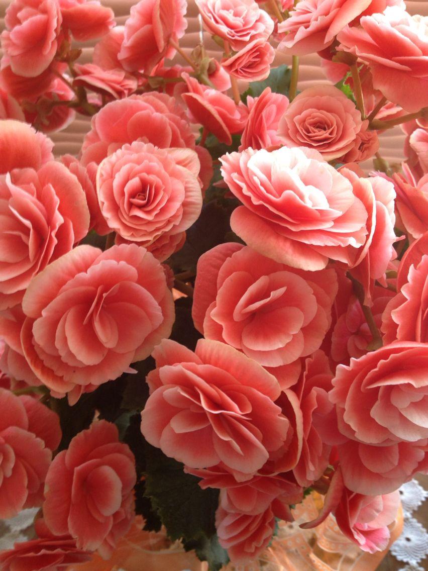 Ganhar flores é ter amores