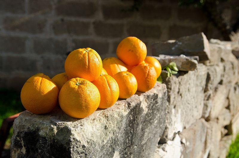 Addio inverno, Giurdignano, Puglia, Italy   da Andrea D'Alba su Flickr {collected by Via Optimae, www.viaoptimae.com}