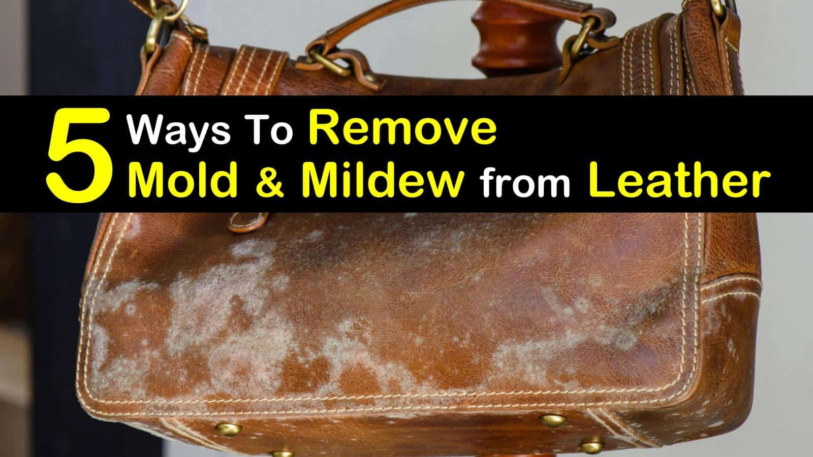 5 Quick & Easy Ways to Remove Mold from Leather (With