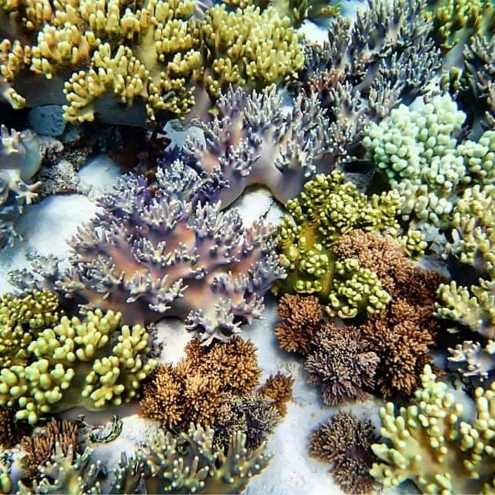 "Vanuatu Beaches: Vanuatu On Instagram: ""The Colourful Treasures Of The Reef"