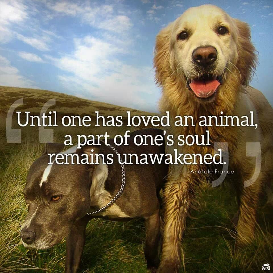 Until one has loved an animal a part of one's soul remains unawakened. #quote #animals #pets #dogs