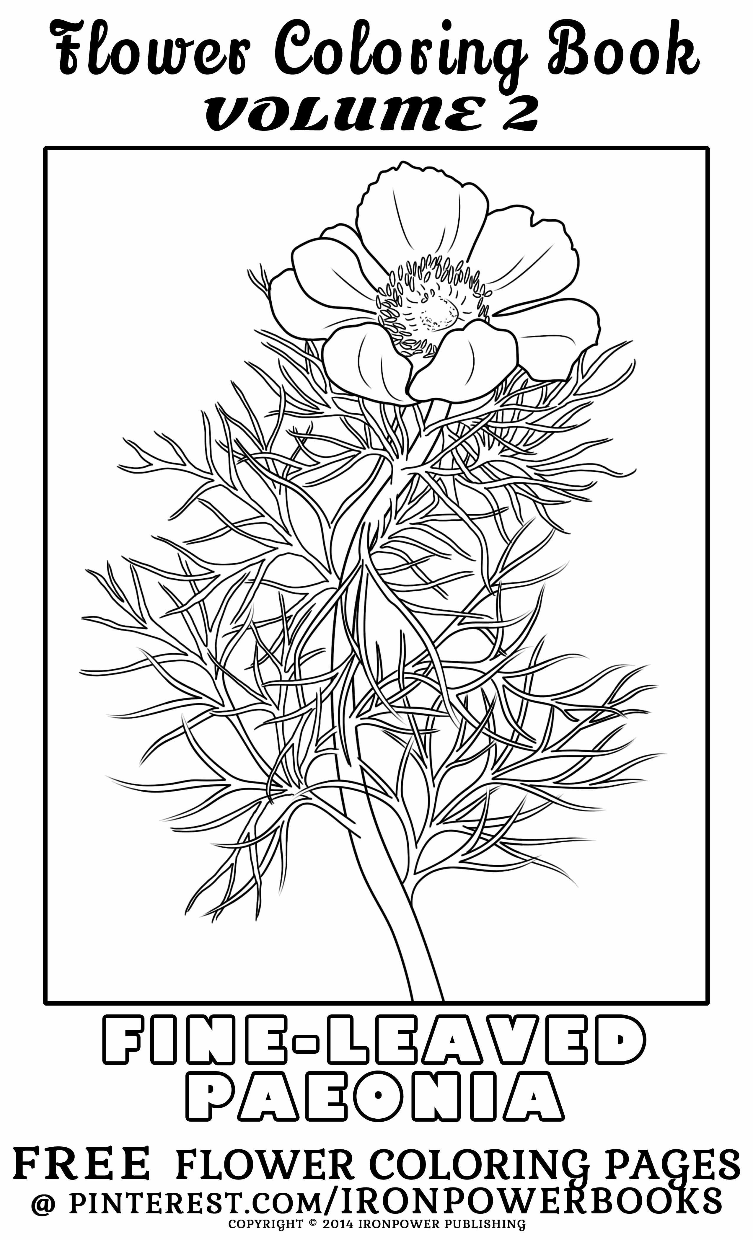 This Beautiful And Intricate Flower Coloring Page For Older Children And Adults Is From The Ironpowerbooks Flower Coloring Pages Coloring Books Coloring Pages