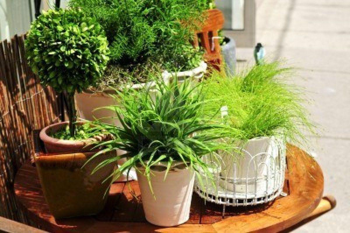 comment prendre soin de ses plantes d 39 int rieur comment prendre prendre soin et prendre. Black Bedroom Furniture Sets. Home Design Ideas