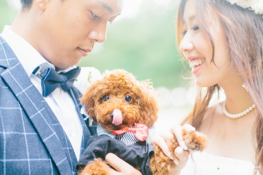 愛犬 ペットと前撮り 結婚式の写真撮影 結婚式 前撮り ウェディング