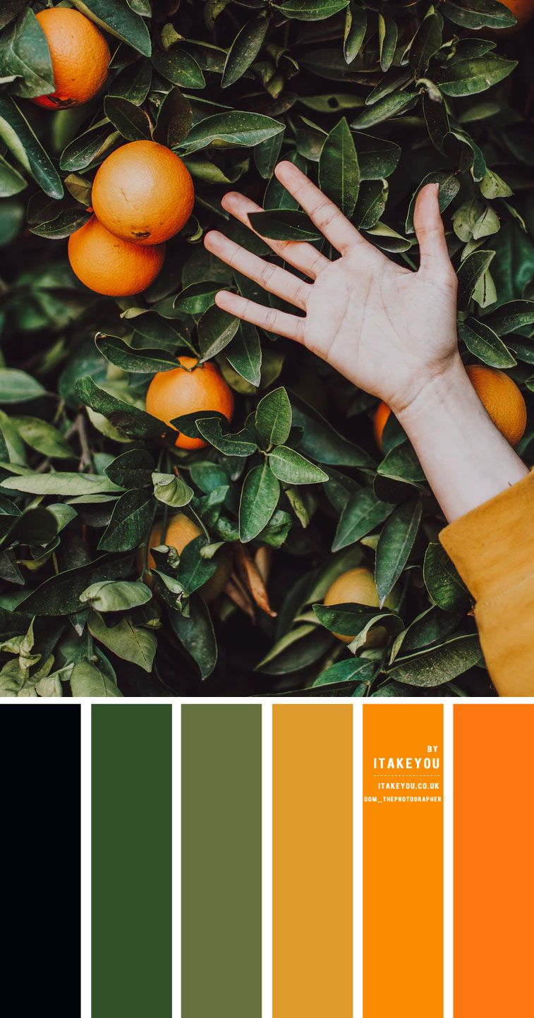 Black Green Orange and Mustard Yellow Color Scheme – Color Palette #33 1 - I Take You | Wedding Readings | Wedding Ideas | Wedding Dresses | Wedding Theme