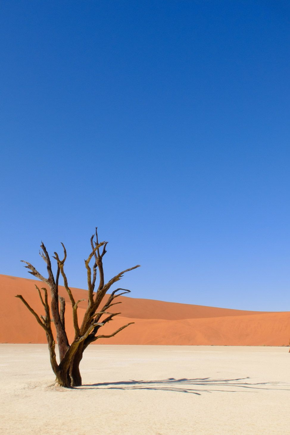 Lonely Tree - it reminds me of my own visit to Deadvlei in Namibia: an incredible place! http://www.zigzagonearth.com/sossusvlei-dunes-deadvlei-dead-lake/