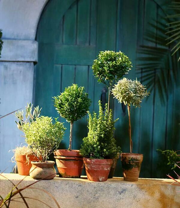 potted herb garden garden ideas pinterest