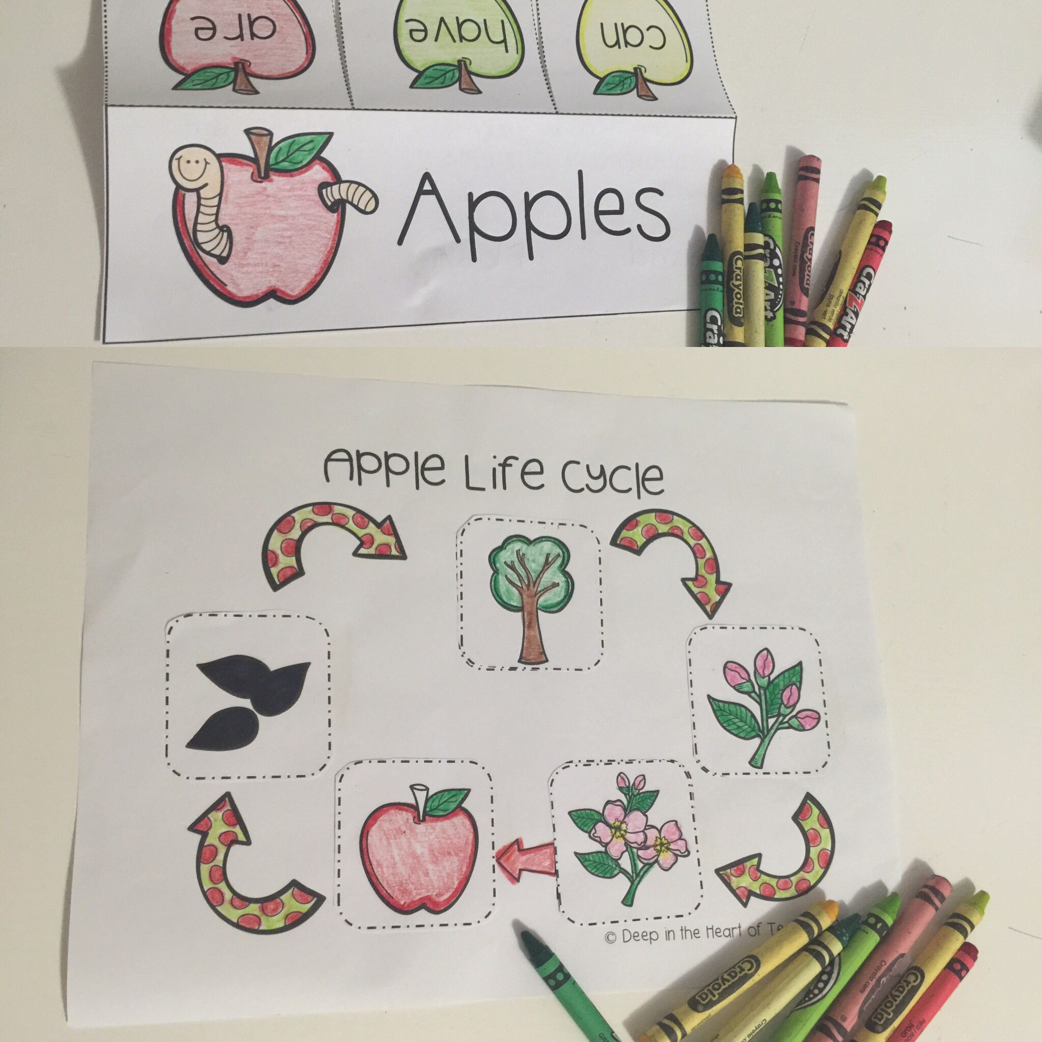 Apples By Deep In The Heart Of Teaching On Teachers Pay