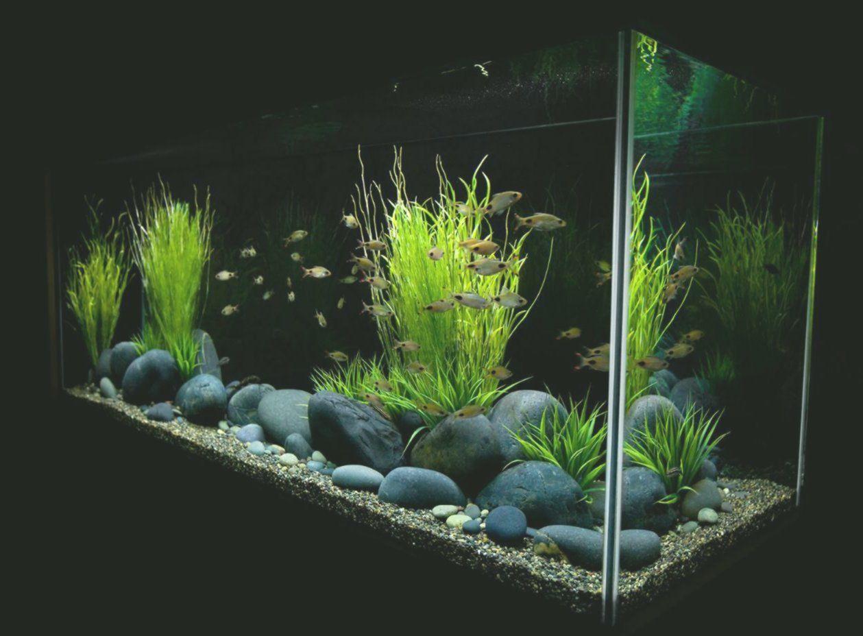 Fresh Water Tank coffee table idea, 2020 Akvaryumlar