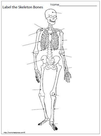 Label the Bones Worksheet | Human body, Worksheets, Media ...