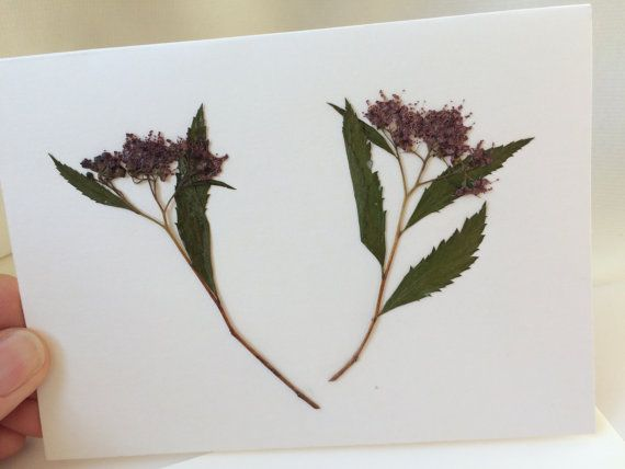 Pressed Dried Purple Aster Flowers Leaves Card By Maryruthforyou Aster Flower Leaf Cards Blank Note Cards