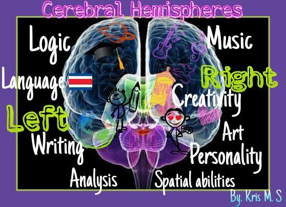 Hemisferios Cerebrales  #EducaciónParaLaDiversidad