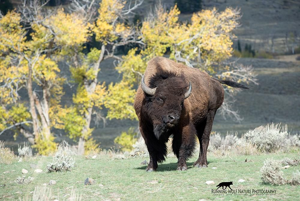 by Deby Dixon @yellowstone
