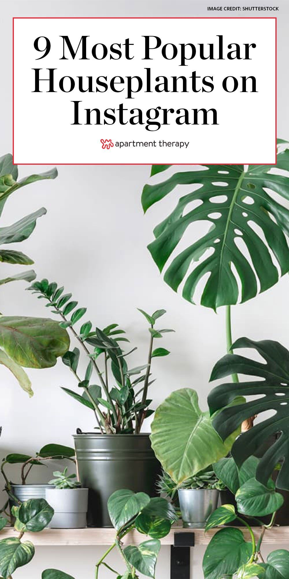 These Are The 9 Most Popular Houseplants On Instagram According To Survey In 2020 Popular House Plants Houseplants Easy House Plants
