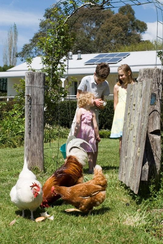 Kangaroo Valley farmstay  Kids love to meet our friendly chooks