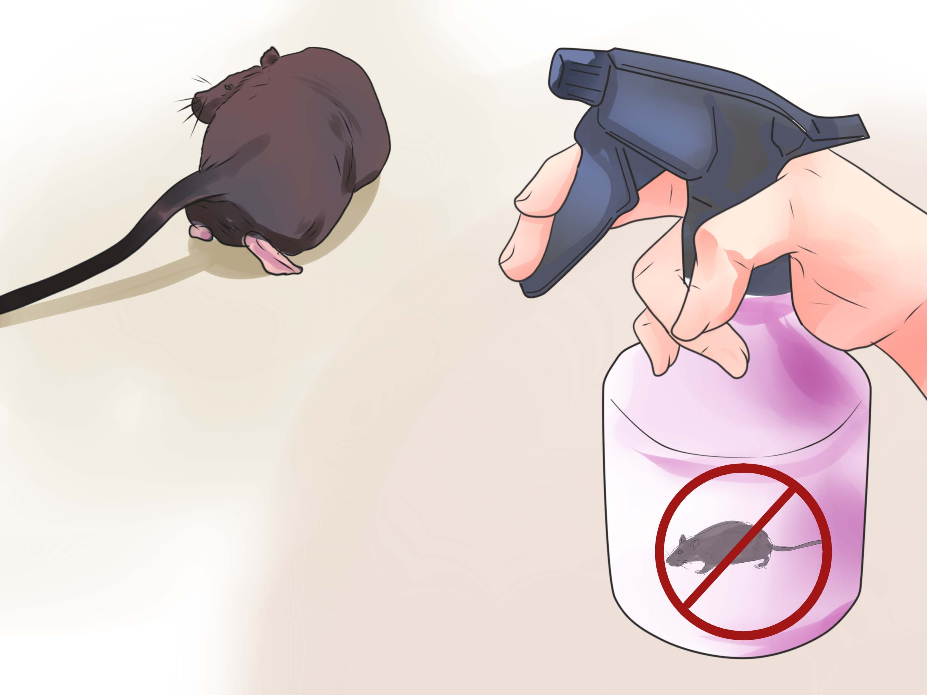 how to get rid of dead mouse smell in your house