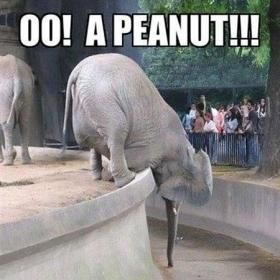 That Is One Determined Elephant