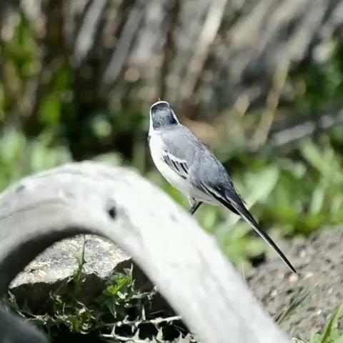 Birds Video Birdsvideo Birdwatching Beautiful Birds Nature Birds Bird Gif