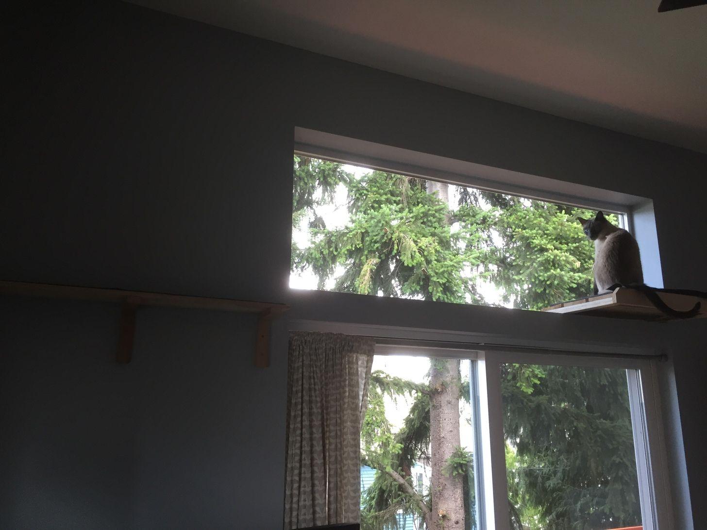 Abstract cat tree