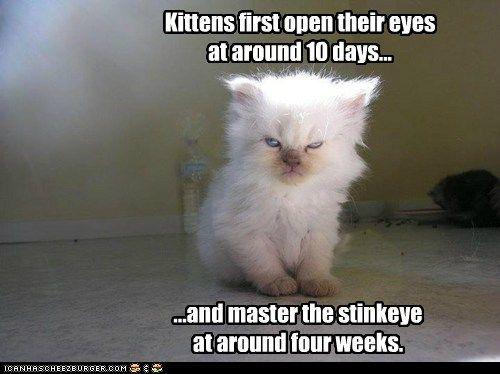 Your Sunday Icanhascheezburger Laughs Funny Cat Pictures Cute Animals Cat Pics