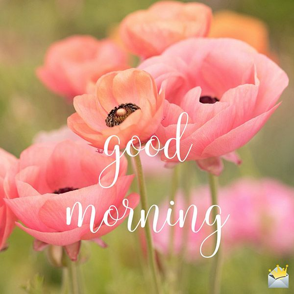 Good morning image with beautiful flowers.