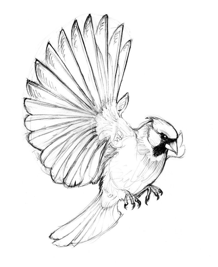 Cardinal Sketch Tattoo Tattoo Drawings Flying Tattoo