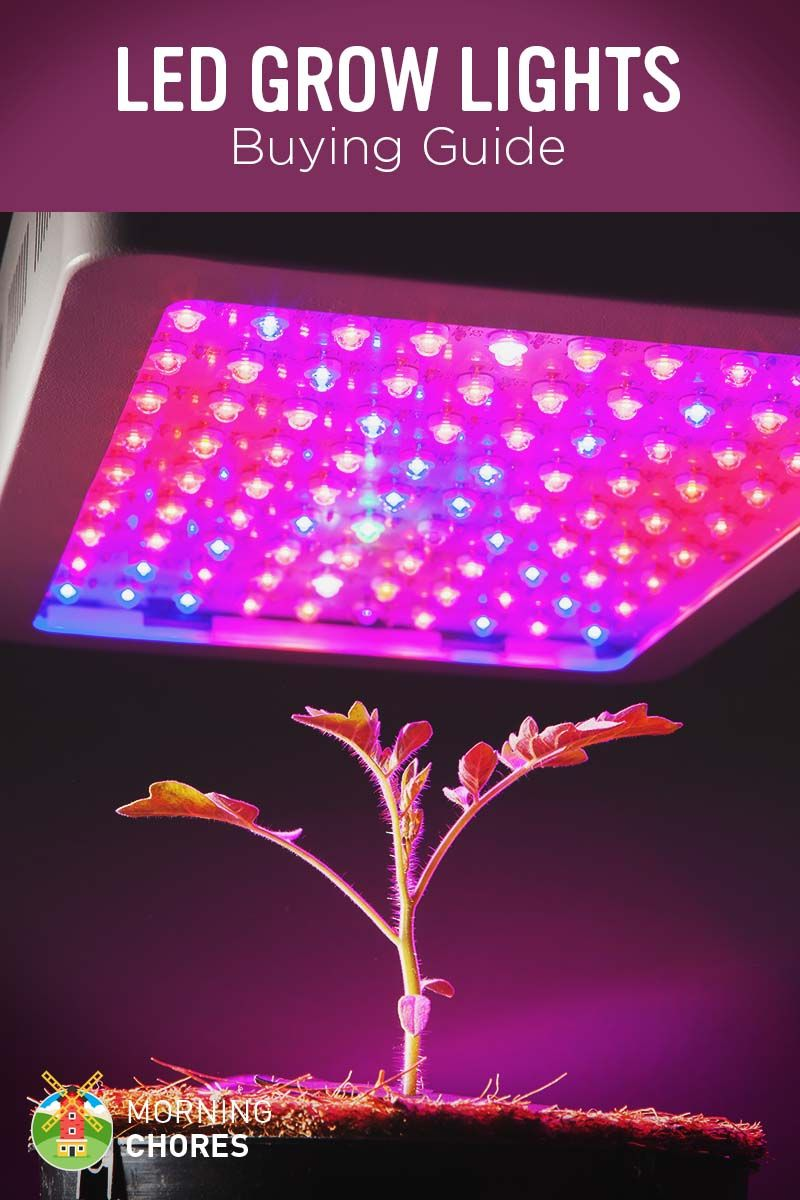 Best LED Grow Lights: Buying Guide and Recommendation | Container gardening | Pinterest | Grow ...