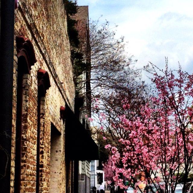 Bricks, Trees, Flowers... Savannah, GA