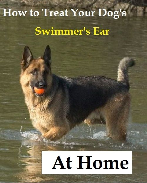 Home Remedies For Swimmer S Ear In Dogs Swimmers Ear Dogs Dog