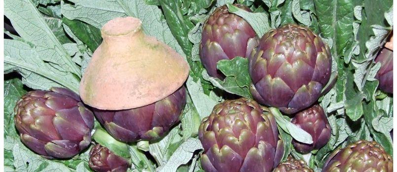 Il carciofo Violetto o di Schito è prodotto in una frazione diCastellammare di Stabia, in provincia di Napoli ed è molto noto in tutta l'area vesuviana.