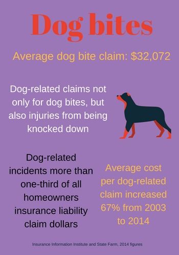 Home Insurance And Pets Guide Dog Biting Elderly Dog Care Dog
