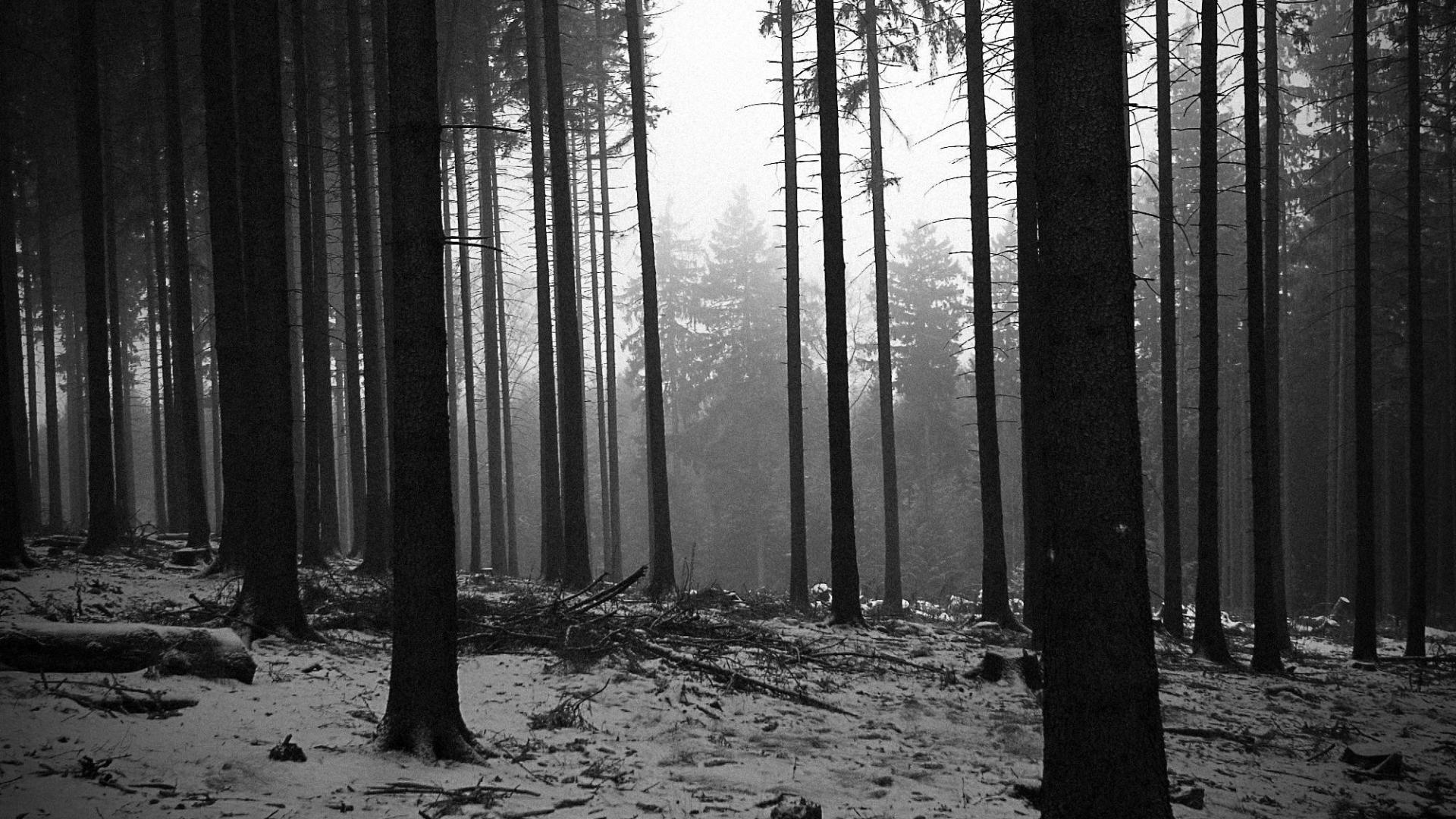 Black And White Forest Wallpaper Full Hd Black And White Landscape Black And White Wallpaper Forest Wallpaper